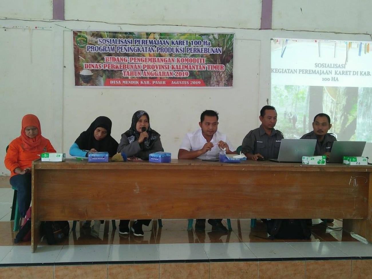 Disbun Laksanakan Peremajaan Karet 100 Hektar