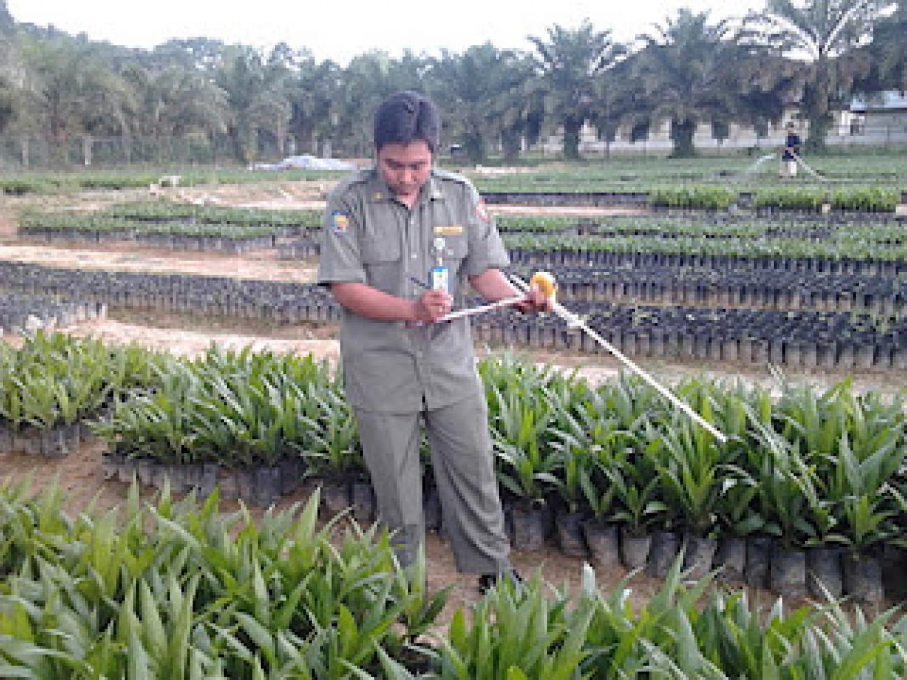 Sertifikasi Benih Perkebunan, Tekan Penyebaran Benih Palsu
