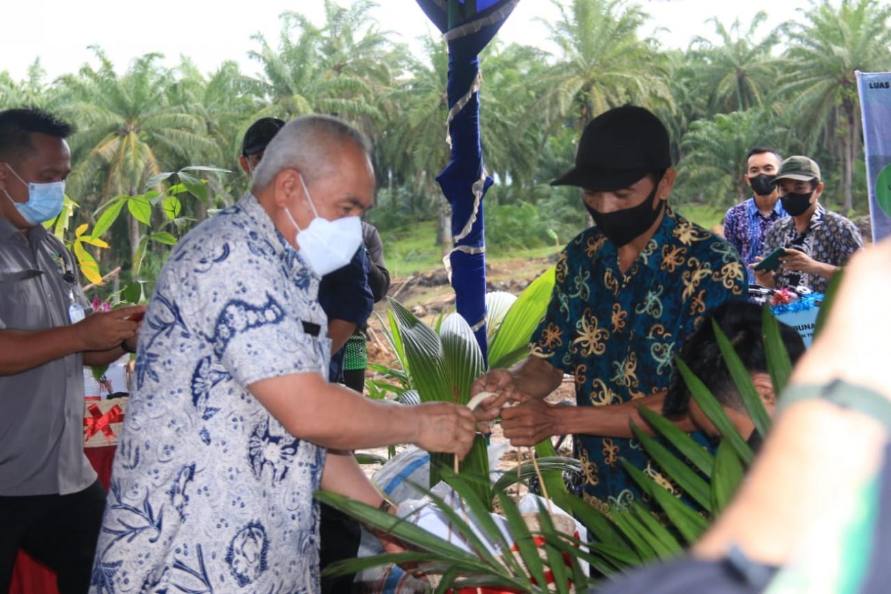 Gubernur Serahkan Bantuan Bibit Sawit Rakyat