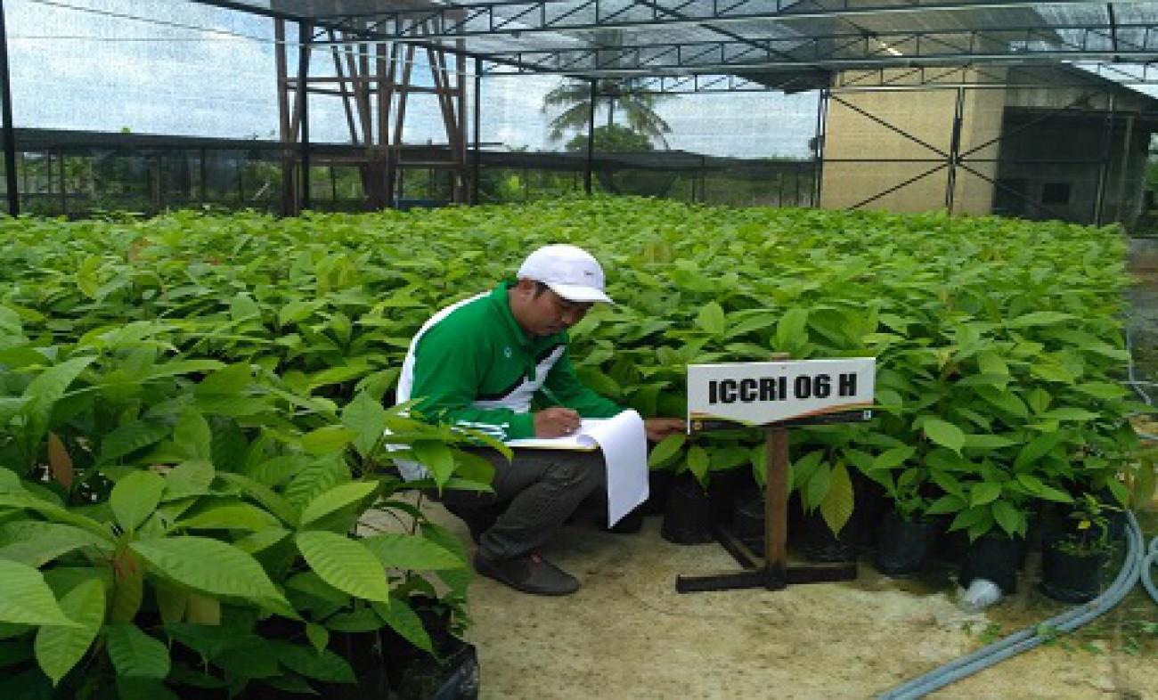 Sertifikasi Benih Perkebunan Sumbang PAD Kaltim Rp. 84 Juta