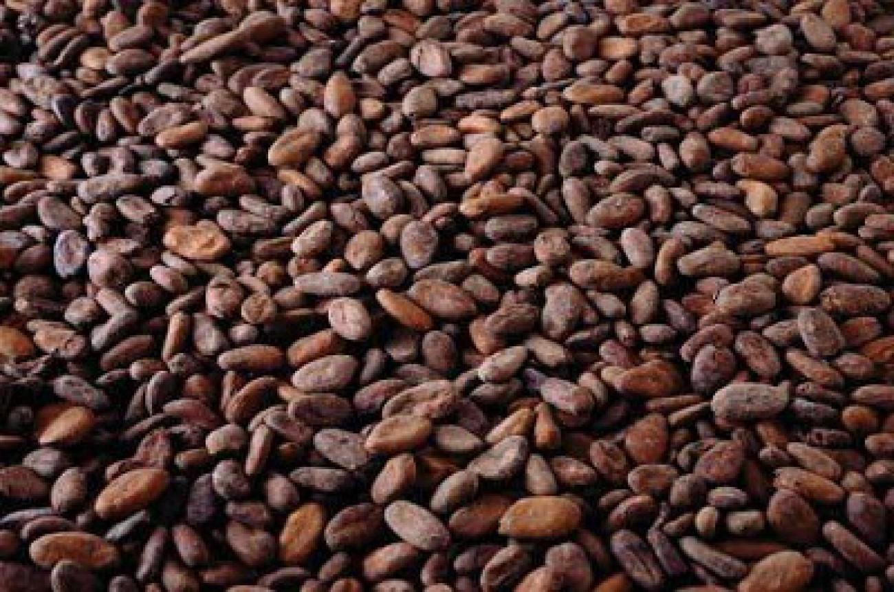 Bea Keluar Biji Kakao Bulan Juli Tetap 10%