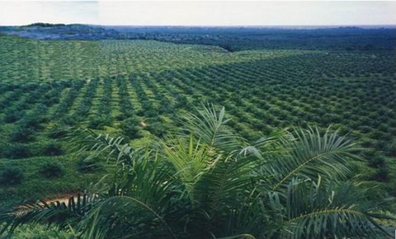 Disbun Kembali Nilai Kinerja Perkebunan di Kabupaten/Kota