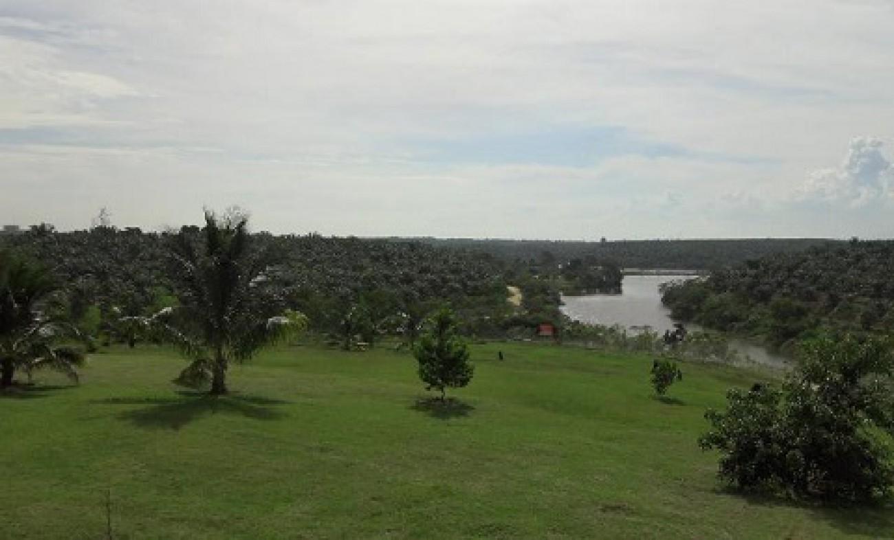 Luas Perkebunan Sawit Kaltim 1,2 juta Hektar
