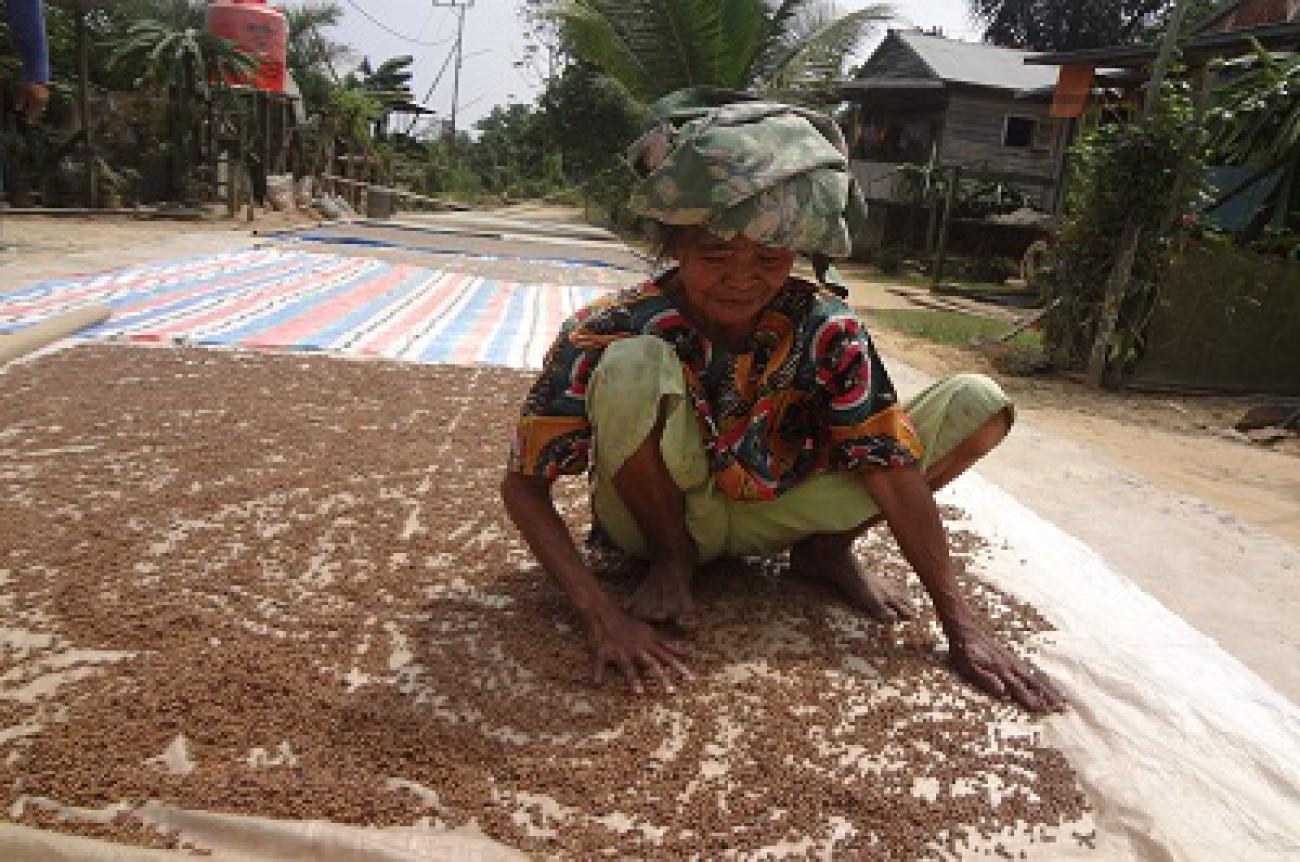 NTP Perkebunan Rakyat Bulan November Naik
