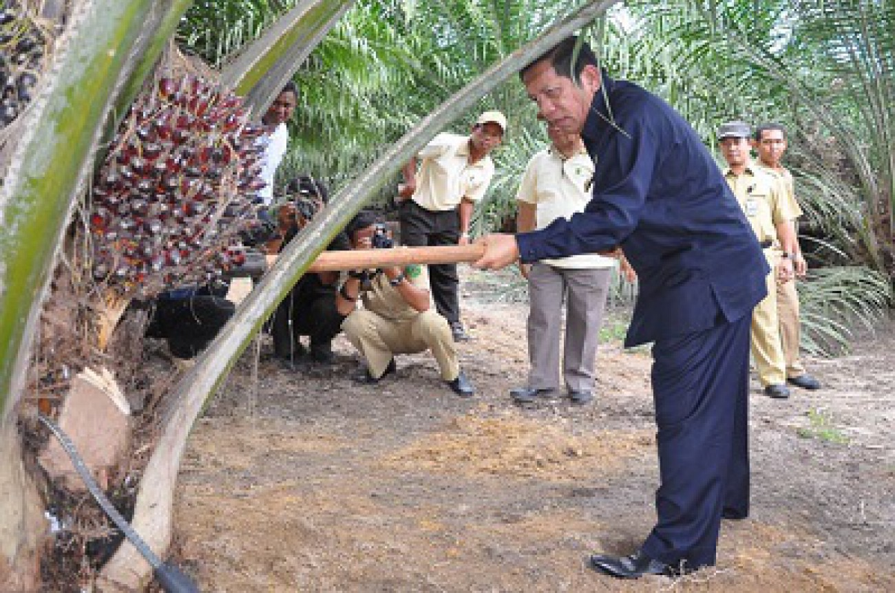 Berau Targetkan Tanam Sawit 164 Ribu Hektar