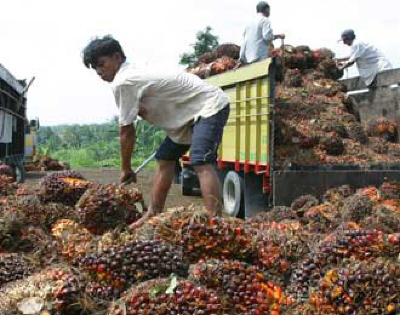 Pemerintah Benahi Hambatan Dalam Industri Sawit