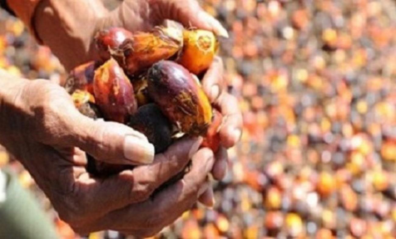 Bea Keluar CPO dan Kakao 0%