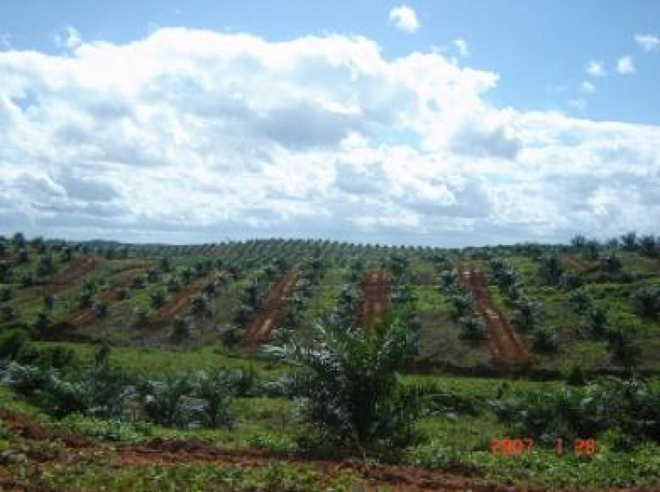 BRI Salurkan Rp 26 Triliun di Sektor Perkebunan
