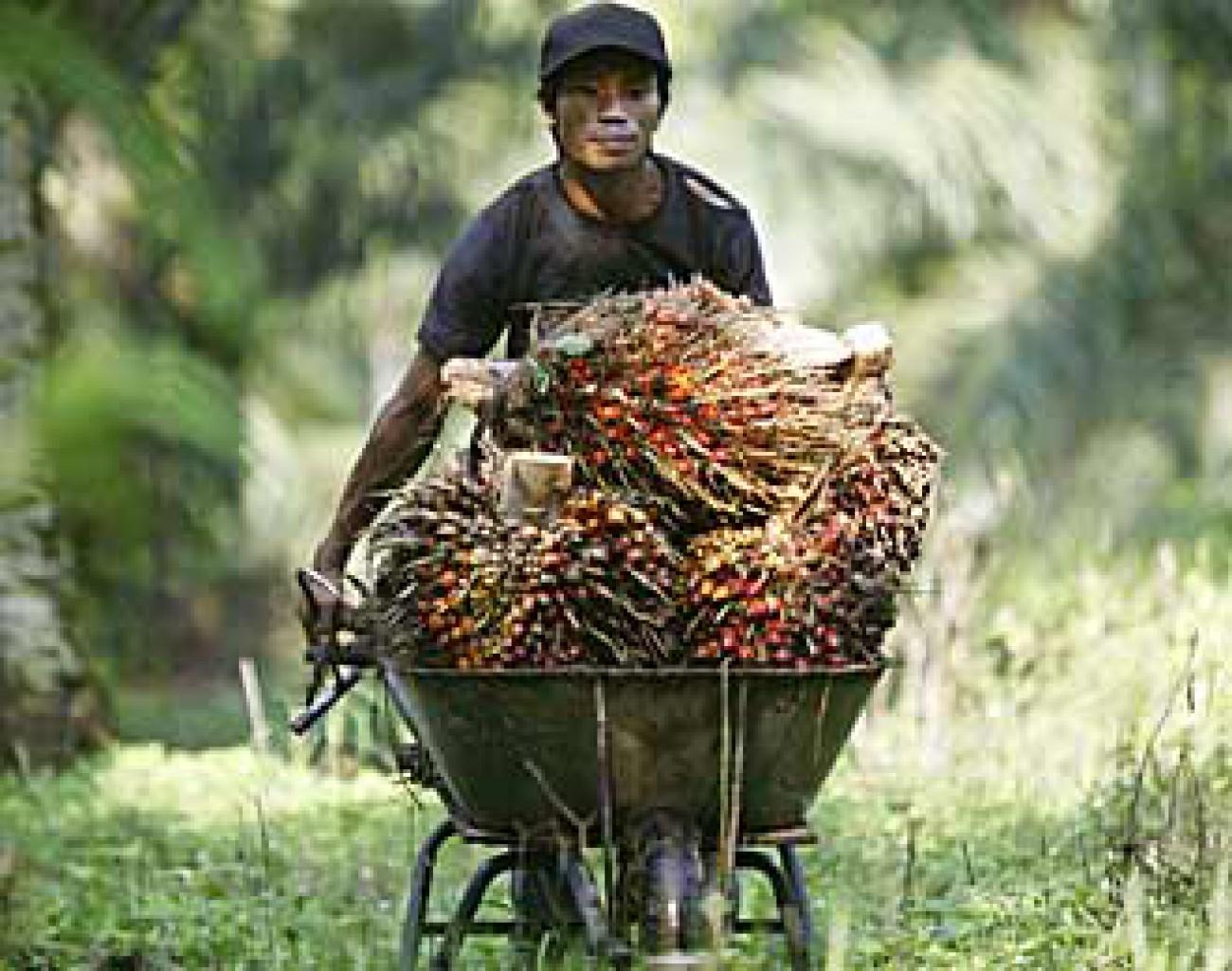 RI Gagal Ajukan CPO dan Sawit Jadi Produk Ramah Lingkungan di APEC 2013
