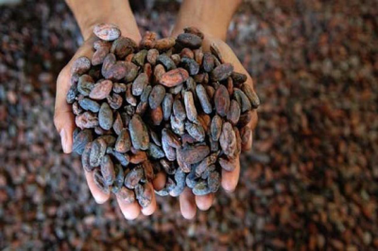 Mentan Setuju Pangkas Bea Masuk Biji Kakao