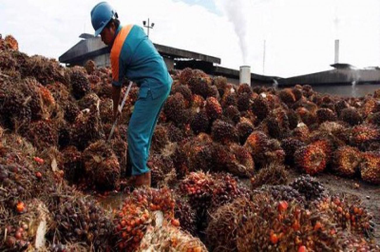 Isran: Sektor Perkebunan Mampu Tingkatkan Kesejahteraan Masyarakat