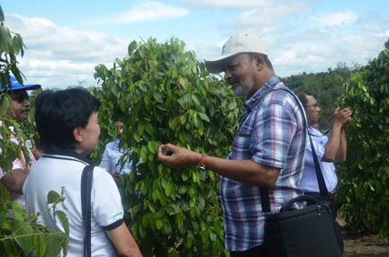 6 Negara IPC Tinjau Perkebunan Lada di Desa Batuah