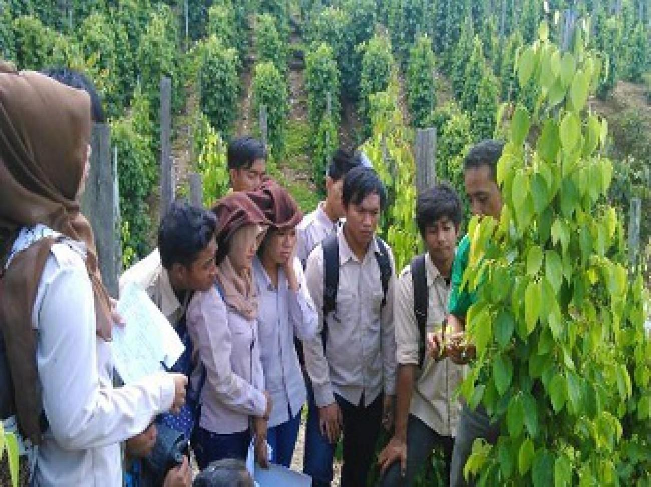 Mahasiswa Politani Praktek Lapang Budidaya Lada