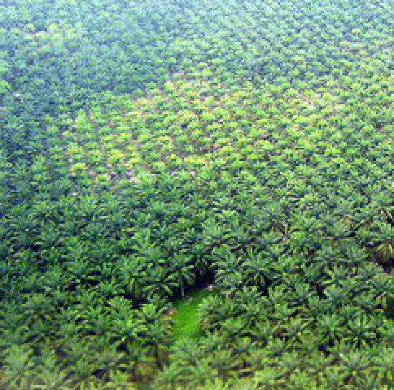 Cegah Asing Dominasi Lahan Sawit, Izin HGU Dibatasi 100.000 Hektar