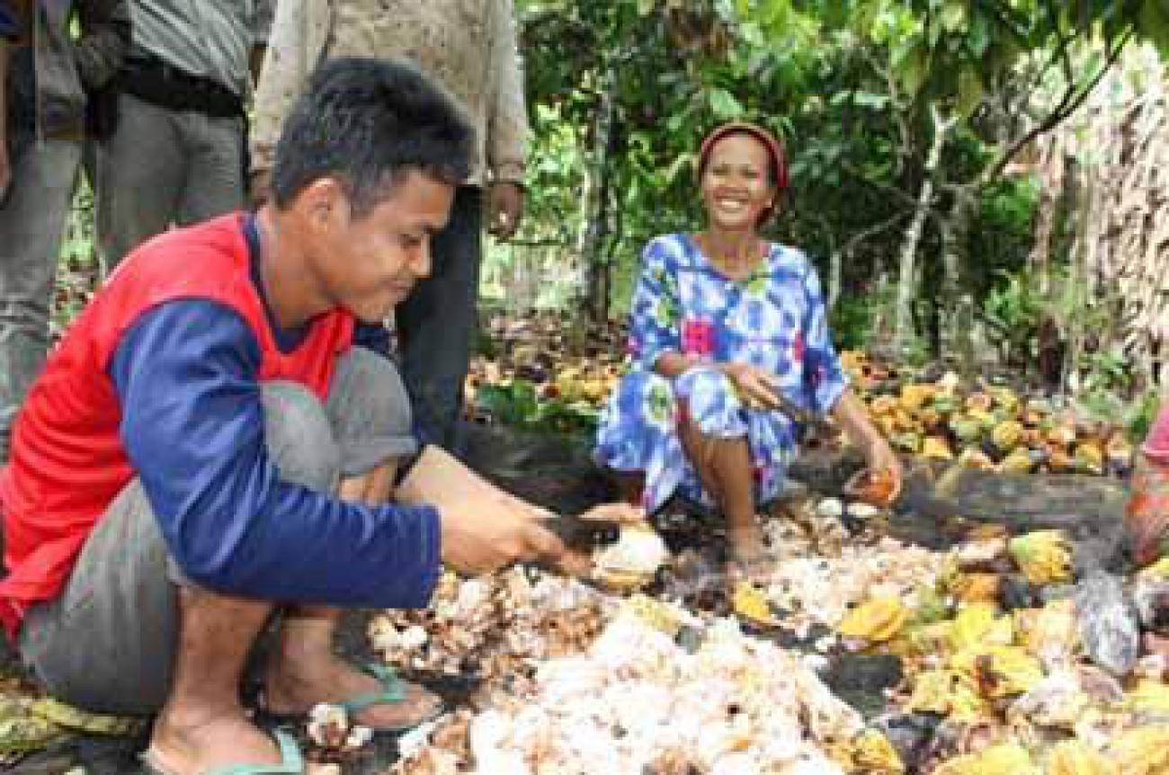 Berau Dorong Industri Pengolahan Kakao