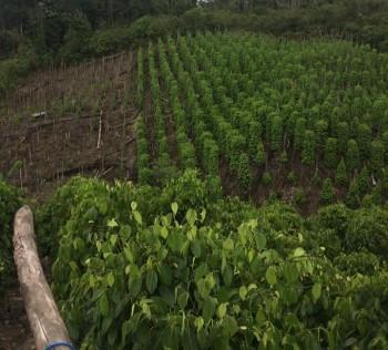 2020, Disbun Optimalkan Pembangunan Perkebunan Berkelanjutan