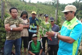 Penguatan Kelembagaan Petani Lada Melalui Dinamika Kelompok