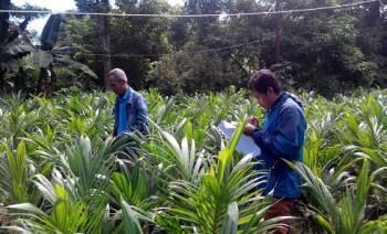 Disbun Intensif Sertifikasi Benih Perkebunan Bermutu
