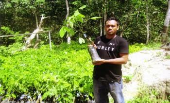 Peremajaan Karet 100 Hektar, Disbun Bagi Bibit Karet