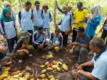 Petani Dilatih Budidaya dan Menggunakan Alsinbun Kakao