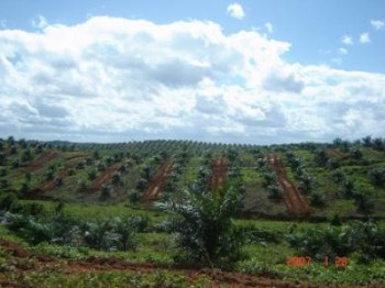 Sistem Kemitraan Inti Plasma untuk Kesejahteraan Petani Sawit