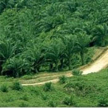 Usaha Perkebunan Banyak Alami Gangguan