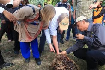 Anggota Parlemen dan Dubes Kerajaan Norwegia Kagumi Perkebunan Sawit Rakyat