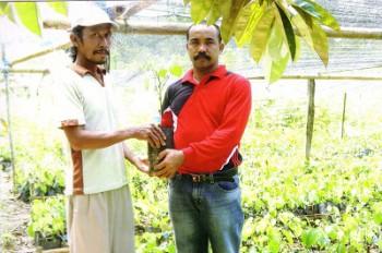 Disbun Serahkan Bantuan Bibit Karet, Lada dan Kelapa Sawit