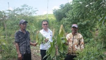 Kadisbun Monev Kegiatan Perluasan Kakao 20 Hektar