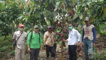 Disbun Kembali Nilai Kinerja Pembangunan Perkebunan