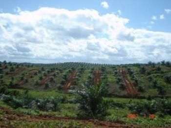 Disbun Nilai Kinerja Perusahaan Perkebunan
