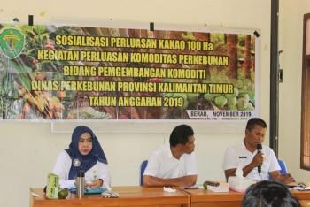 Sosialisasi Perluasan Kakao 100 Ha