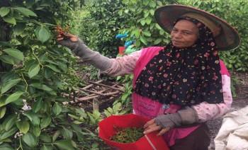Nilai Tukar Petani Perkebunan Rakyat Turun