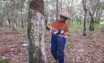 NTP Perkebunan Rakyat Bulan Mei Turun