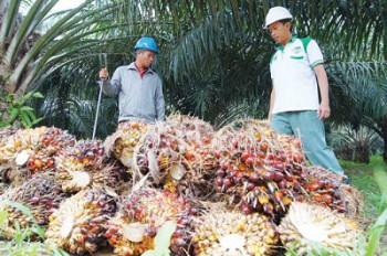 Produk Kelapa Sawit Kaltim Hanya Sebatas Penghasil CPO