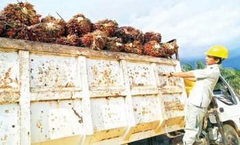Pengurangan Pungutan Ekspor CPO Dipertimbangkan