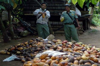 Kecamatan Karangan Kembangkan Kakao