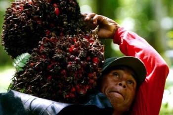 Sektor Pertanian Mesti Diproteksi