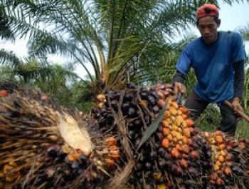 Dihadang Konspirasi Eropa untuk Membatasi Dominasi Ekspor CPO