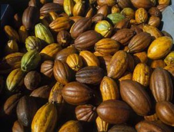 Kemendag Tetapkan Harga Pokok Ekspor Biji Kakao