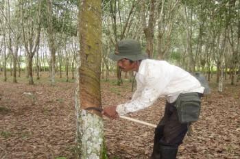 NTP Perkebunan Rakyat Kaltim Turun Lagi