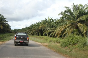 Penanganan Gangguan Usaha Perkebunan Perlu Libatkan Lintas Instansi