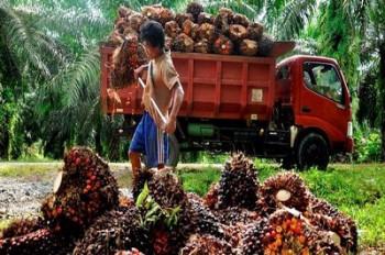 Bea Keluar CPO Januari - Februari 2014 Capai Rp 2,57 Triliun