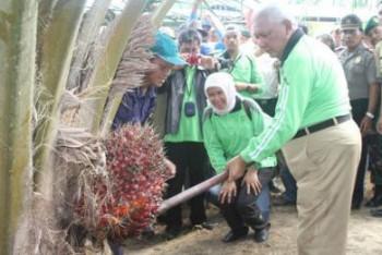 Ekstensifikasi Kebun Sawit Capai 56,91 Persen