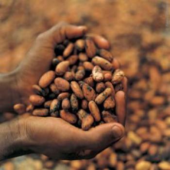Permentan Mutu Biji Kakao Segera Terbit