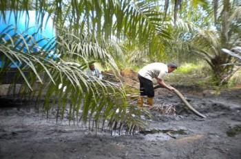 Petani Diajak Kembangkan Pola Tumpang Sari Sawit dan Kedelai