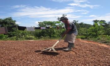 NTP Perkebunan Rakyat di Kaltim Turun