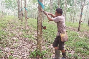 Nilai Tukar Petani Perkebunan Rakyat Semakin Terpuruk
