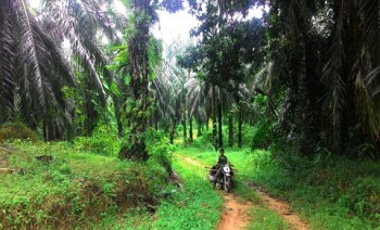 BPDP Danai Replanting Sawit 17.000 Hektare di Kabupaten Paser