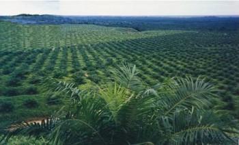 Perkebunan Berperan Strategis Pacu Pertumbuhan Ekonomi